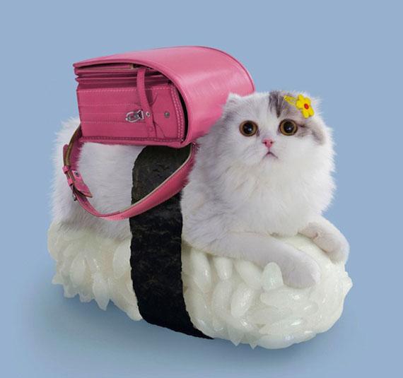 Un sushi cat avec un sac à dos rose