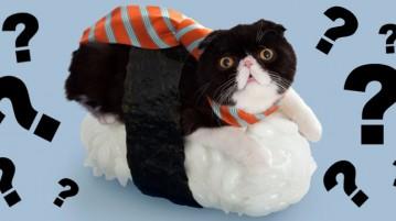 illustration de l'article sur les sushi cats