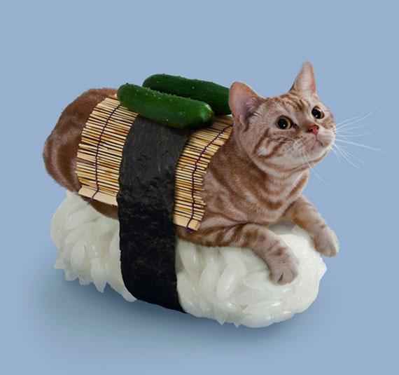 Un sushi cat avec une natte de bambou et des concombres