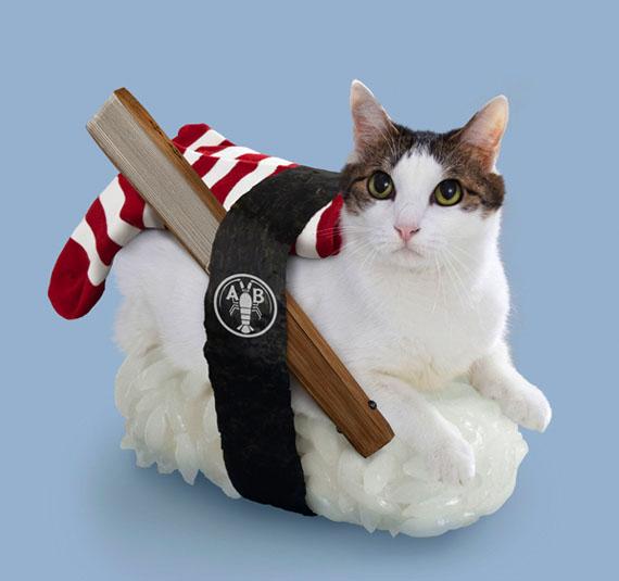 Sushi cat avec une chaussette rouge et blanche