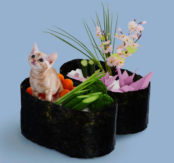 sushi chaton dans un maki