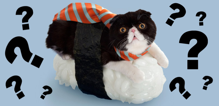 illustration de l'article sur les sushi cats